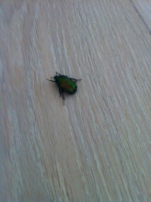 A bug came into my life, literally!