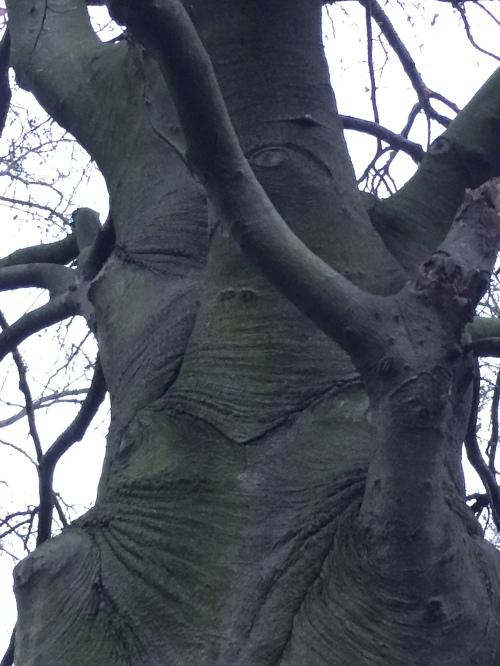 Elephant like tree (no retouching yet a lot of touching)